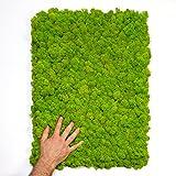 Nature Parts Moos•Moos Islandmoos Organic Moosbild ´Nicolai´ (40x60cm) in Apfelgrün – Moosplatte – Einzigartiges Gefühl trifft auf Besonderes haptisches Gefühl