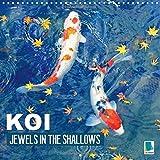 Koi Jewels In The Shallows 2016: Kois - Beautiful Status Symbols (Calvendo Animals)