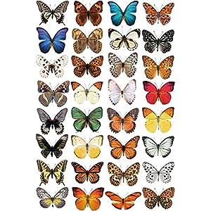 Schmetterling Fensteraufkleber zum Schutz vor Vogelschlag – 32 schöne Schmetterling Glassticker, doppelseitig und selbstklebend zum Schutz vor Vogelkollisionen