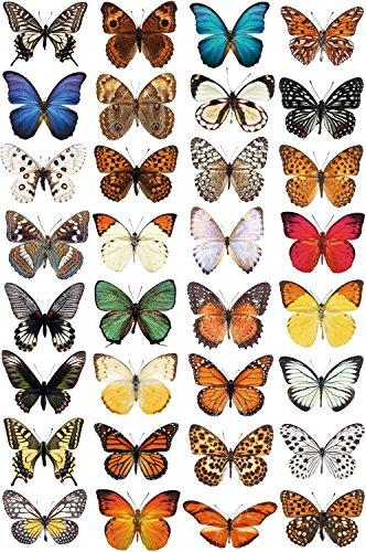 Schmetterling Fensteraufkleber zum Schutz vor Vogelschlag - 32 schöne Schmetterling Glassticker, doppelseitig und selbstklebend zum Schutz vor Vogelkollisionen