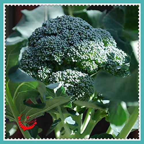aby Brokkoli-Samen Popural 100% Echt Seeds (Baby-brokkoli)
