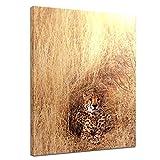 Kunstdruck - Gepard - 50x60 cm - Bilder als Leinwanddruck - Wandbild von Bilderdepot24 - Tierwelten - Katze - Raubtier - Gepard im hohen Gras