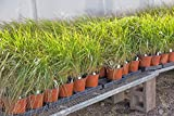 Planters 5