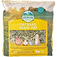 Orchard Grass Petlife Oxbow Hay for Small Pet, 1.13 kg