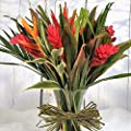 Striking Beauty Tropical Fresh Flower Bouquet – Exotic Flowers Delivered FREE UK Next Day in a 1hr Delivery Time-Slot 7 Days a Week - Unusual Gift Arrangement of Red, Orange & Yellow Real Cut Flowers