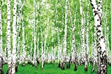 GREAT ART Birkenwald Wanddekoration - Wandbild Waldlichtung Motiv XXL Poster (140 x 100 cm)