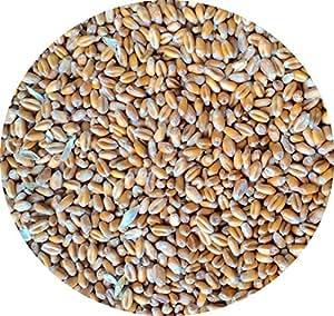 StaWa Weizen, Geflügelfutter, Hühnerfutter, !!Mühlenqualität!! GVO-frei 30 kg