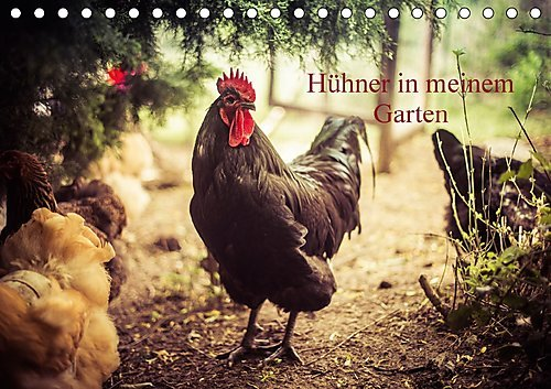 hhner-in-meinem-garten-tischkalender-2017-din-a5-quer-professionelle-hhnerfotos-monatskalender-14-se