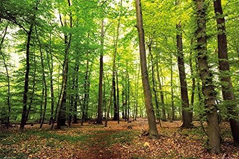 Poster De Foret - Posters: Forêts Posters XXL - Forêt Du