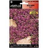 Semillas de Flores - Aliso Anual violeta - Batlle