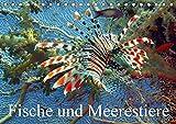 Fische und Meerestiere (Tischkalender 2019 DIN A5 quer): Die farbenfrohe Unterwasserwelt unserer Ozeane (Monatskalender, 14 Seiten ) (CALVENDO Tiere)