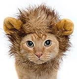 InnoWill Gatos Pequeños Perros Sombrero Halloween Mascota Cosplay Disfraz de Vestido Up Lion Peluca con orejas