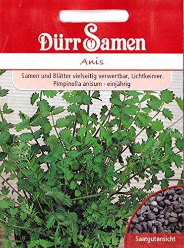 Anis, Pimpinella anisum, ca. 200 Samen