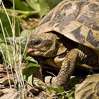 Erba per tartaruga in miscuglio – PER TARTARUGHE (Semente)