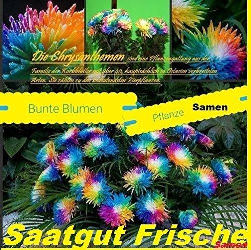25x Fiori Variopinti Seme Arcobaleno Semi Semi Di Fiori Eye-catcher Pianta Fiori Rarità Giardino Novità (Rose Garden Di Bambù)