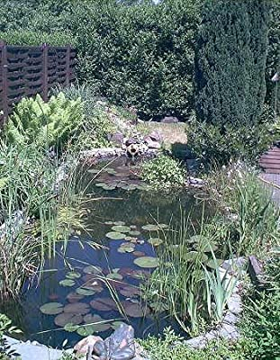 Über 20 Wasserpflanzen für den Gartenteich, Teich von 519 bei Du und dein Garten