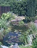 Über 20 Wasserpflanzen für den Gartenteich