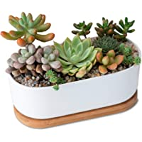 Furn Aspire Designer Ceremic Oval Planter Pot for Succulent and Cactus with Bamboo Tray Decorate at Home Office Table…