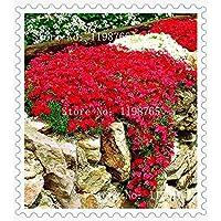 2: Flower Seeds 100 Aubrieta Seeds - Cascade Purple Flower Seeds, Superb Perennial Ground Cover, Flower Seeds For Home Garden