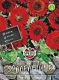 Sonnenblumen SPERLI's Rote Sonne von Sperli-Samen