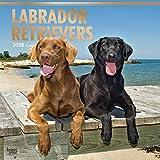 Labrador Retrievers 2018-18-Monatskalender mit freier DogDays-App: Original BrownTrout-Kalender [Mehrsprachig] [Kalender] (Wall-Kalender)