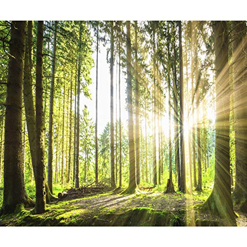 decomonkey Fototapete Wald 350x256 cm Tapete Wandbild Bild Fototapeten Tapeten Wandtapete Landschaft Baum Natur -