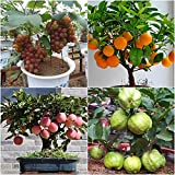 #4: NooElec Seeds India Dwarf Home Garden Fruit Apple, Grapes, Guava and Orange Seeds Combo (EGm25) - Set of 25