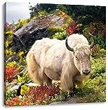 Schönes Yak Himalaya, Format: 70x70 auf Leinwand, XXL