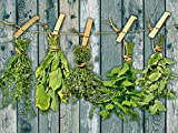 Artland Qualitätsbilder I Alu Dibond Bilder Alu Art 60 x 45 cm Pflanzen Kräuter Foto Grün A7PP Kräuter mit Holzoptik