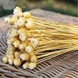 #4: White : 50pcs/lot Home Decor Dried Flower Bouquet Natural Dried Flowers Wedding Party Decorative Photography Props P0.21