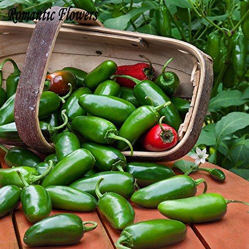 50 particules / Sac Jalapeno Chili Pepper Seeds croissance rapide bricolage jardin légumes plantes, les plus populaires Pepper