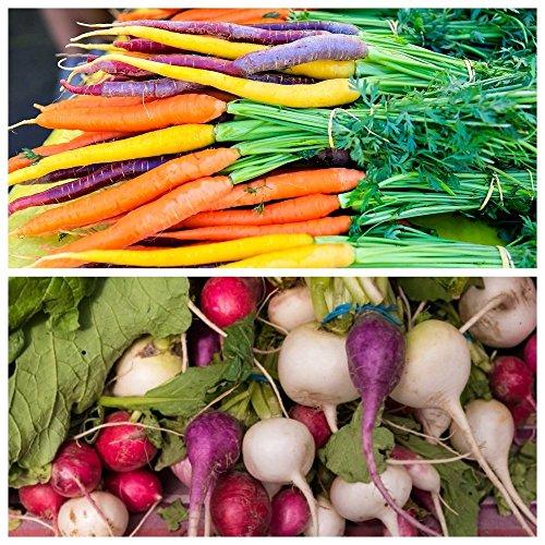 2 in 1 - Karotte und Mehrfarben Rettich - SEED TAPE - samen (Seed Tape)