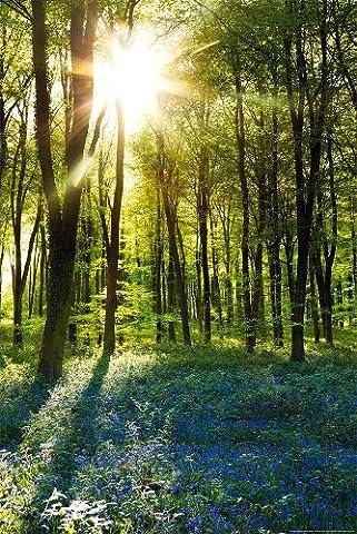 Poster De Foret - Poster Forêt au levé du soleil (61cm