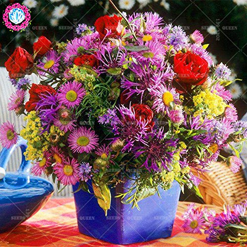11.11 Big Promotion! 100 pcs / lot rares graines de Bleuet coloré arbre chinois jardin graine flowerbonsai & maison plante herbe organique 1
