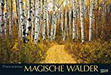 Magische Wälder 2017: PhotoArt Panorama Kalender -