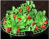 Erdbeeren-Reifer, Handliche Erdbeer-Unterstützung für Ihren Garten, einfach zu bedienen Erdbeer-Pflanze-Unterstützung halten Sie Erdbeeren aus verrotten in den regnerischen Tagen (5 Stück)