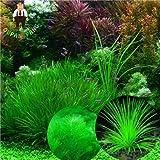 SwansGreen 200 Stück Aquarienpflanzen Samen Grass (Mix) Wasser Wasserpflanze Samen Easy Grow Pflanzensamen für Dekor-Aquarium Hot Verkauf 2