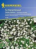 Schleierkraut Weiß von Kiepenkerl