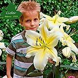 CIOLER Seed House - 100pcs Raras Lirio oriental'Sugar Love' fragancia Semillas De Flor Hortícolas Plantas Raras exótico perennes resistentes para jardin/patio/balcon