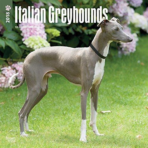 italian-greyhounds-italienisches-windspiel-2018-18-monatskalender-mit-freier-dogdays-app-original-br