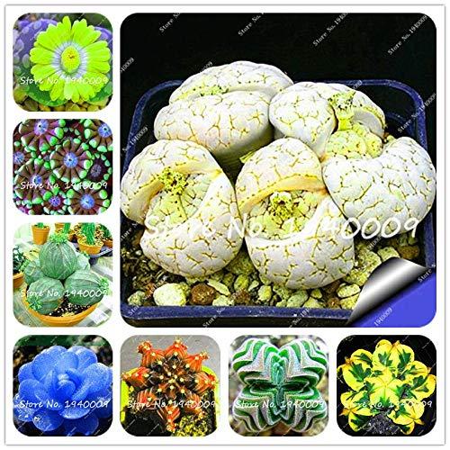 Plentree Samen Paket: 100Pcs Amazon Seltene Bonsai Garden Diy Blumentopf Bonsai Sementes Indoor s SeedsFlower Startseite s Sukkulente Zum Verkauf: gemischt