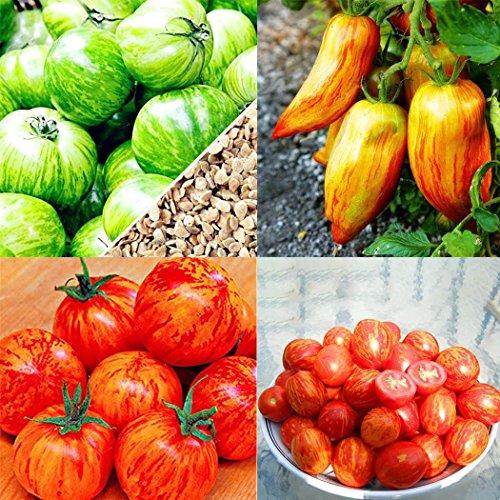 Acecoree Samenhaus- 100Stk Tomatensamen, Gemüsesamen Bunte Tomaten Samen für Garten,Bauernhof