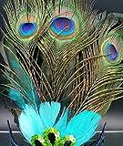 PRIMI Masquerade Kostüm Party Halloween Cosplay Maske Pfau Federn Maske -