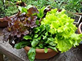 Best Lettuces - Go Green Lettuce Mixed Leaves-80 Seeds Review
