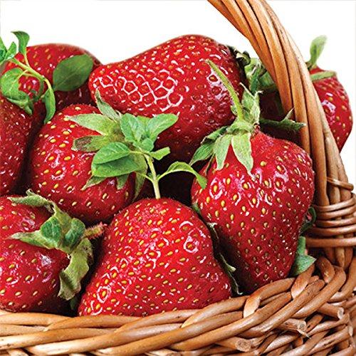 'Strawberry Einkaufskorb–Pack von 20Papier Servietten–33x 33cm, 3-lagig, Shabby Chic
