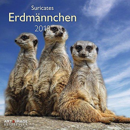 Erdmännchen 2018 - Broschürenkalender, Tierkalender, Wandkalender - 30 x 30 cm