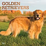 Golden Retrievers 2019 - 18-Monatskalender mit freier DogDays-App (Wall-Kalender)