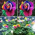 TOPmountain Garten Rainbow Flower Pflanzen Samen 600 Stück Garten Balkon Pflanzen Samen Dekor von TOPmountain - Du und dein Garten
