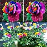 BigFamily 600pcs bunter Regenbogen-Blumensamen-Haus-Garten-Pflanzen-Mehrfarbeneinzelner Liebhaber