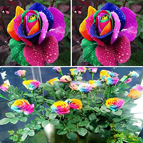 TOPmountain Garten Rainbow Flower Pflanzen Samen 600 Stück Garten Balkon Pflanzen Samen Dekor